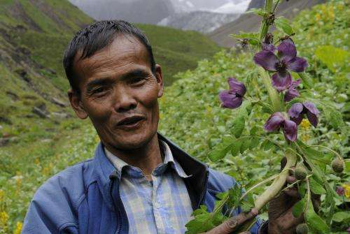 Environment change threatens indigenous traditional knowledge