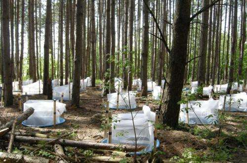 European fire ant impacts forest ecosystems by helping alien plants spread