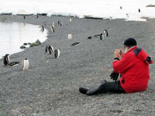 File photo of a tourist taking pictures of penguins on the Antartic Peninsula