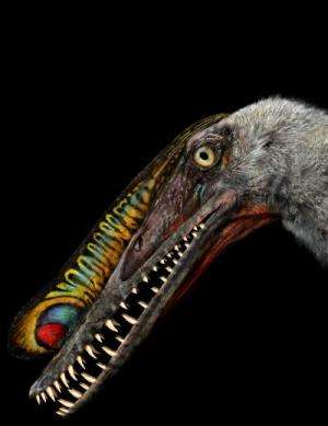 First 3-D pterosaur eggs found with their parents
