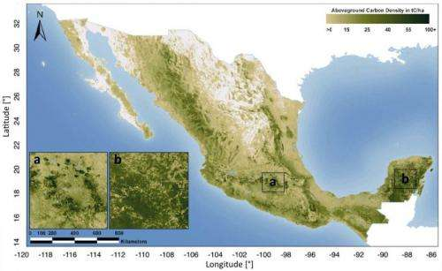 First detailed map of aboveground forest carbon stocks in Mexico unveiled