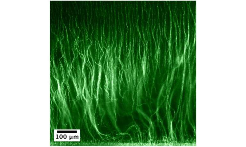 Good hair day: New technique grows tiny 'hairy' materials at the microscale