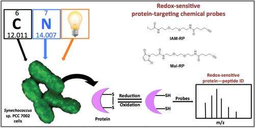 Identification of redox-sensitive enzymes can enrich biofuel production research