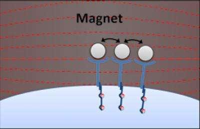 Magnetic medicine