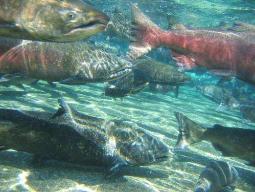 Making dams safer for fish around the world