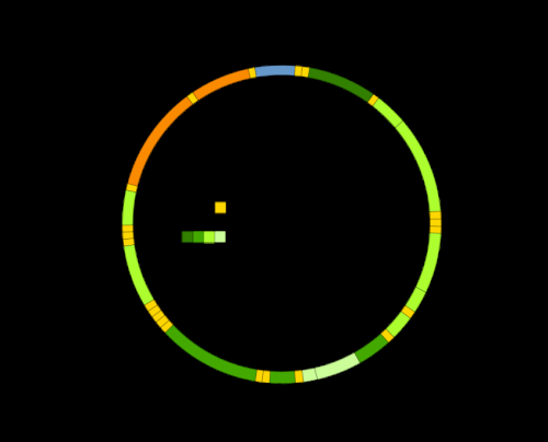 Mitochondrial DNA , mtDNA