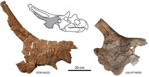 New horned dinosaur reveals unique wing-shaped headgear