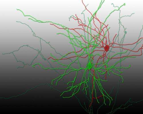 Optogenetics captures neuronal transmission in live mammalian brain