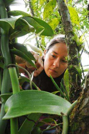 Orchid named after UC Riverside researcher