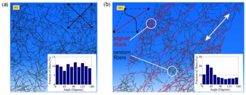 Penn researchers model the mechanics of cells' long-range communication