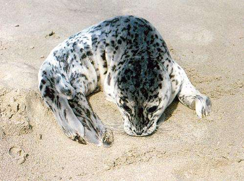 Public urged to refrain from approaching seal pups
