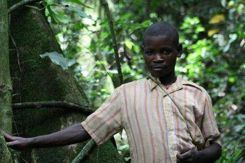 Pygmy phenotype developed many times, adaptive to rainforest