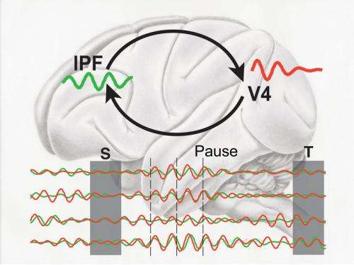 Scientists have decoded the functioning of the short-term memory