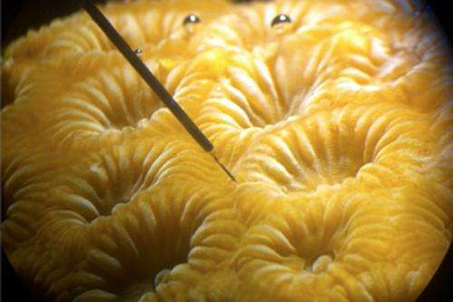Scientists shine a light on coral photosynthesis