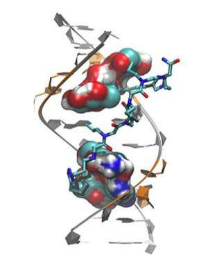 Scientists uncover image of muscular dystrophy defect & design targeted drug candidates