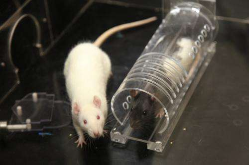 Social experience drives empathetic, pro-social behavior in rats