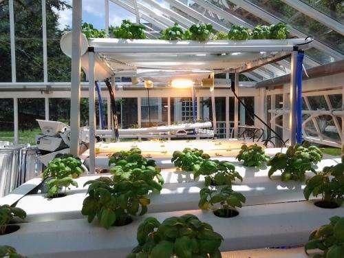 La agricultura sin suelo prepara a la próxima generación para el futuro de la energía verde