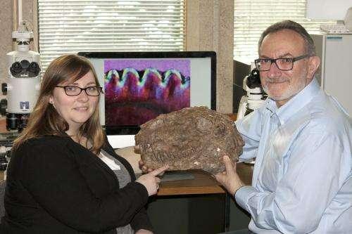 'Steak-knife' teeth reveal ecology of oldest land predators