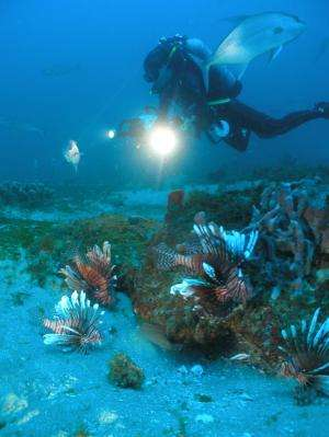Study finds warming Atlantic temperatures could increase range of invasive species