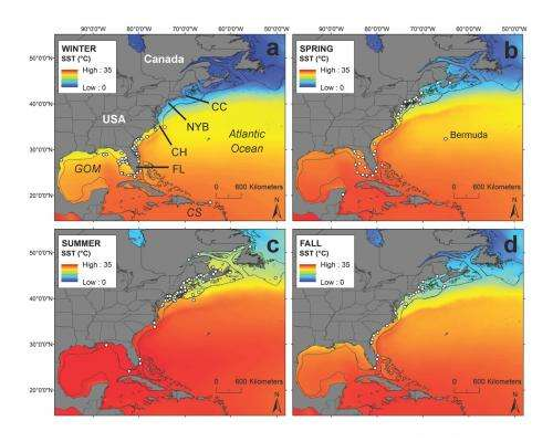 Study of white sharks in the Northwest Atlantic offers optimistic outlook for recovery