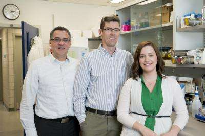 Study shows how streptococcal bacteria can be used to fight colon cancer