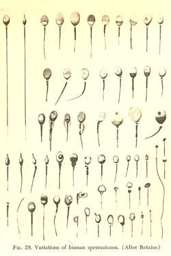 The history of medical studies of male infertility