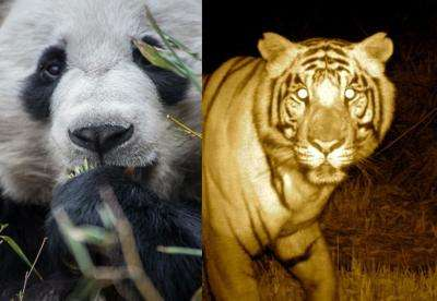 Tigers, pandas and people a recipe for conservation insight