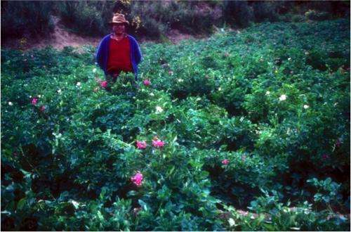 Top-down and bottom-up approach needed to conserve potato agrobiodiversity