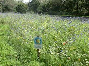 Urban sites sown with wildflowers attractive to wildlife