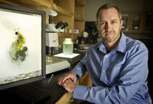 UT Arlington team says non-genetic changes can help parents or offspring, not both