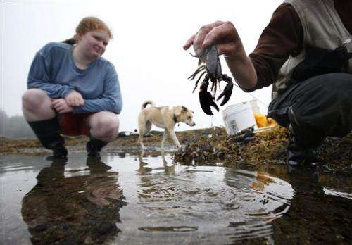 Warming Gulf of Maine imperils lobster, fish catch
