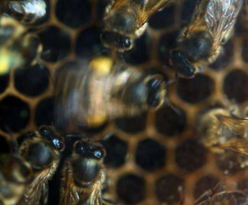 Wondering about the state of the environment? Just eavesdrop on the bees