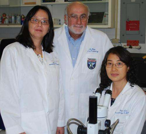 Neuroscientists use snail research to help explain 'chemo brain'