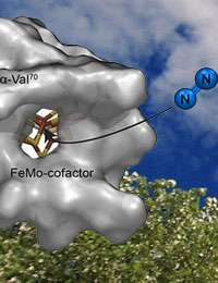 Scientists discover channel used by catalyst to produce ammonia, vital for food and fuel crops