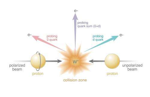 Research reveals gluons make a significant contribution to spin