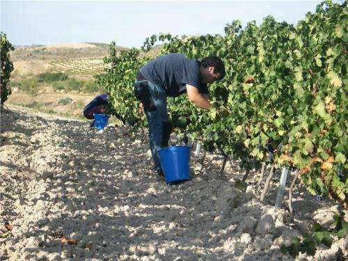 Researchers study the effects of climate change on Tempranillo grape wines