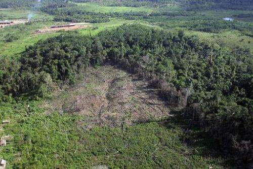 Deforestation in the Amazon rose 29 percent between August 2012 and July of last year to 5,891 square kilometers, reversing seve