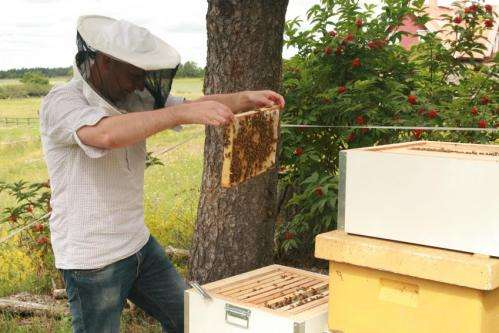 Historia evolutiva de las abejas reveladas por la genómica.