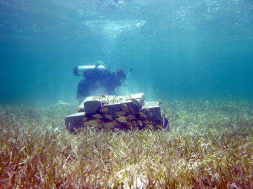 Fish communities key to balancing nutrients in coral reefs