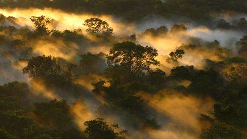 Increase in CO2 has not stimulated growth of tropical trees