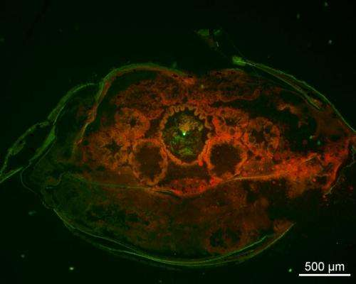 Microplastics in the ocean: Biologists study effects on marine animals