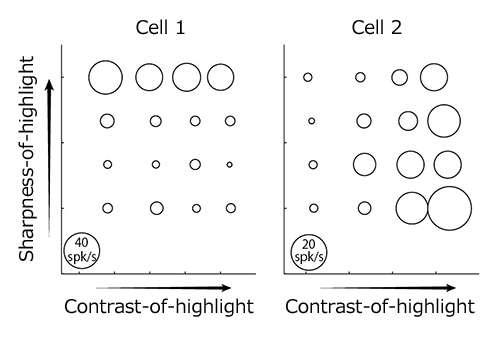 Neurons express 'gloss' using three perceptual parameters