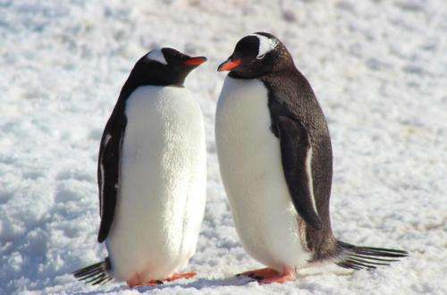 Rise and fall of prehistoric penguin populations charted