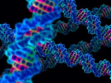 Scientists identify 'long distance scanner' for DNA damage