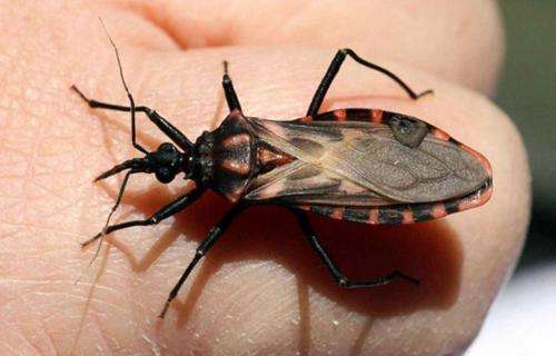Specialists hope to obtain vaccine against Chagas disease in less than three years