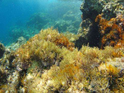 Study finds tropical fish moving into temperate waters