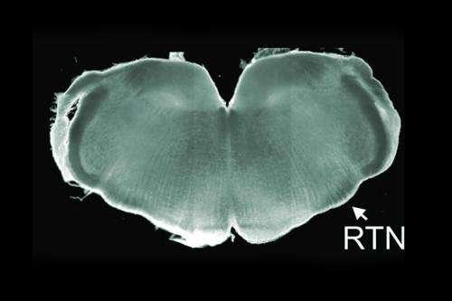 Tiny patient prompts advance in neuro-genetics
