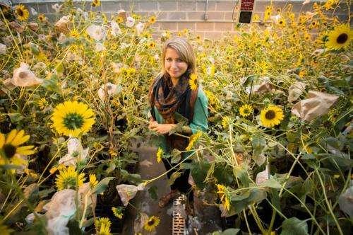 Undergraduate researcher studies sunflowers' power to clean up soil