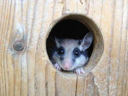 Scientists uncover secrets of hibernation