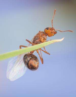 10 things to know about invasive fire ants on the march